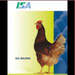 Isa brown 1