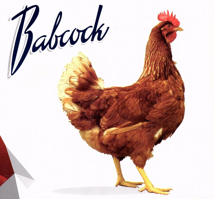 babacock