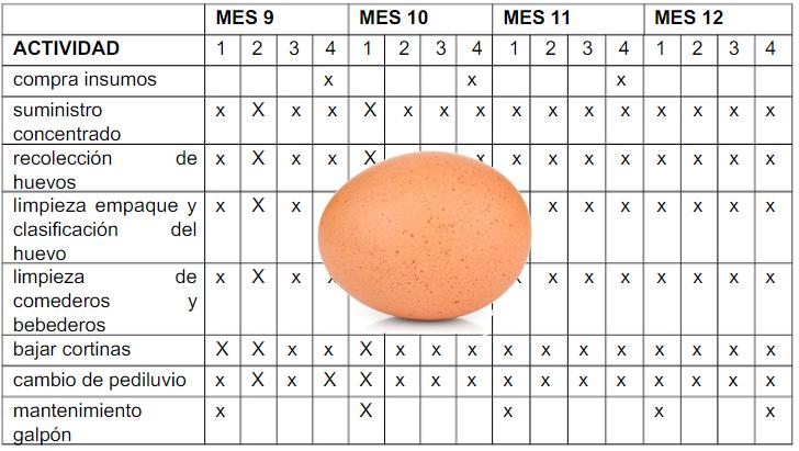 ¿Qué es un cronograma avicola?